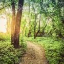 One Light, Many Paths