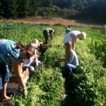 MIC gleaning