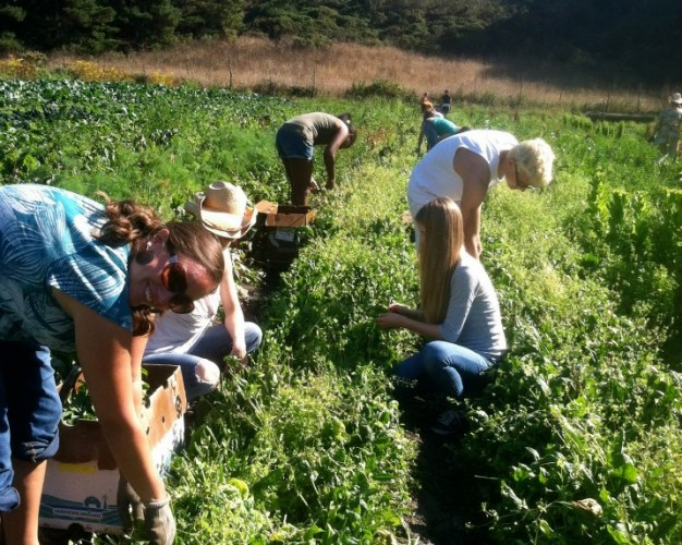 Youth Gleaning Event at Green Gulch Farm