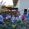 Youth Harvest / Cook for Homelessness