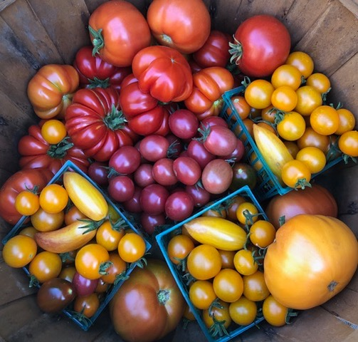 Support the Farm Stand for Hunger Relief!